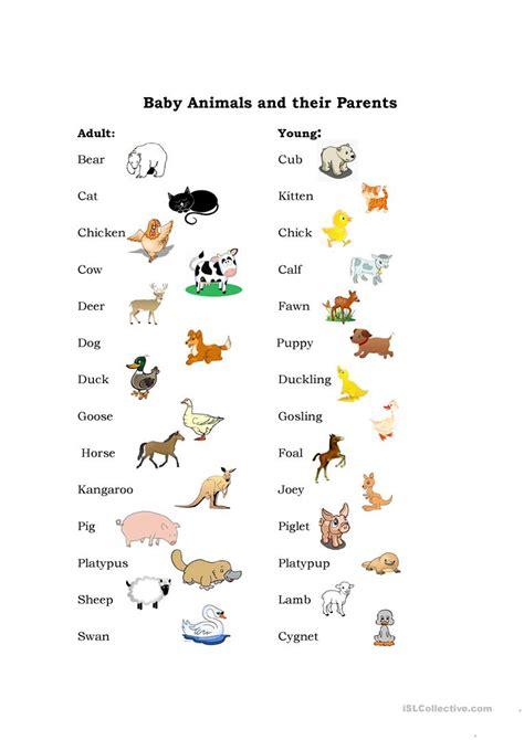Baby Animals Worksheet  Free Esl Printable Worksheets Made By Teachers