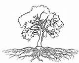 Tree Roots Oak Coloring Outline Drawing Olive Clipart Massive Trees Drawings Tattoo Plants Pages Draw Pencil Getdrawings Printable Luna Getcolorings sketch template
