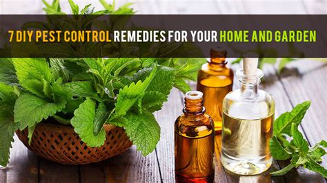 7 diy pest remedies for your home and garden
