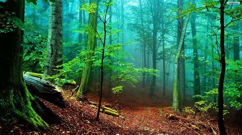 floresta hd wallpaper download