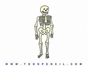Kid Skeleton Drawing