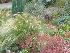 Winterharte Gräser Garten : winterharte gr ser garten ziergras winterhart garten gras ~ Michelbontemps.com Haus und Dekorationen