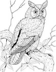 Hoot Owl Nest
