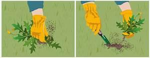 Comment Enlever Les Mauvaises Herbes : d sherber une pelouse gazon ~ Melissatoandfro.com Idées de Décoration