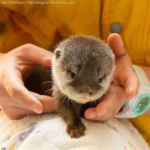 Adorable baby otter pictures | Amazing Creatures