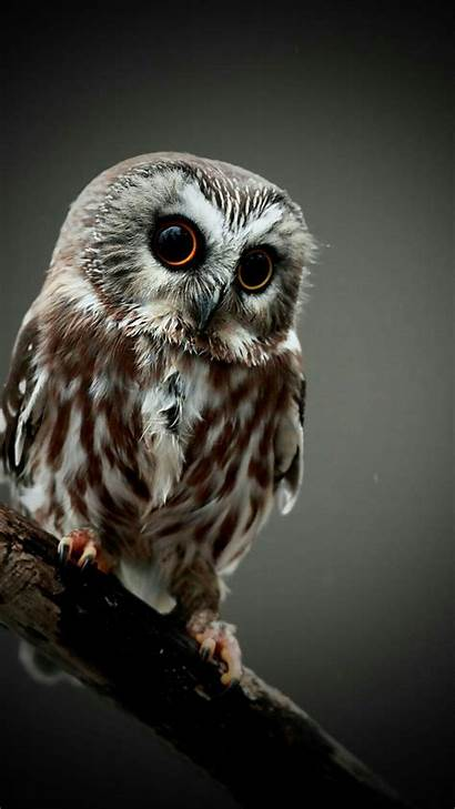 Wallpapers Owl Funny Phone Iphone Background Cell