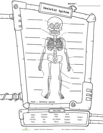 skeleton diagram school science worksheets