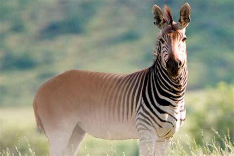 animales extintos buscar  google animal animales