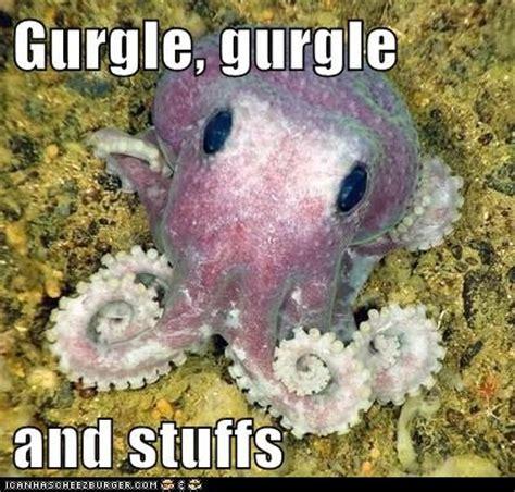 Octopus Meme - octopus meme 28 images weekend aquarium meme roundup aquanerd octopus memes octopus meme
