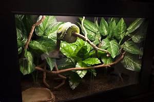 1000+ images about Arboreal Vivarium on Pinterest