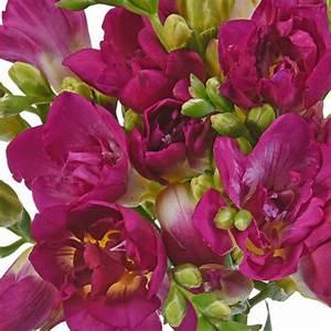 Berry Pink Designer Freesia Flower
