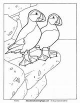 Puffin Pages Coloring Birds Colouring Printable Animal Puffins Bird Worksheets Educational Preschool Animals Fun Books Adult Sheets Drawing Kidsuki Patterns sketch template