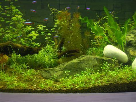 plantes aquarium sans sol nutritif 28 images plant