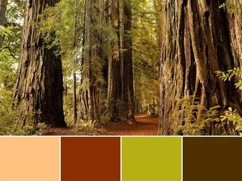 18 color palettes inspired by national parks travel