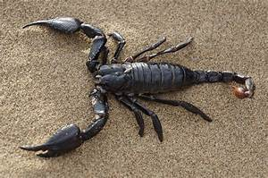 Idead for Naming Your Pet Scorpions