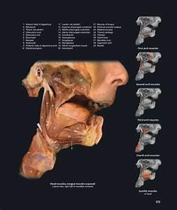 Mark Nielsen Anatomy