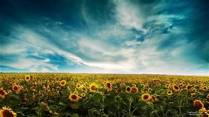 Landscape Sunflowers Wallpapers 1080 1280 1366