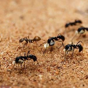 Mittel Gegen Ameisen Im Rasen : ameisen blattl use vertreiben und tipps mein sch ner garten ~ Watch28wear.com Haus und Dekorationen