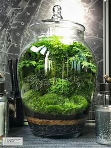 Bonsai Im Glas : 25 unique indoor fairy gardens ideas on pinterest miniature gardens diy fairy garden and diy ~ Eleganceandgraceweddings.com Haus und Dekorationen