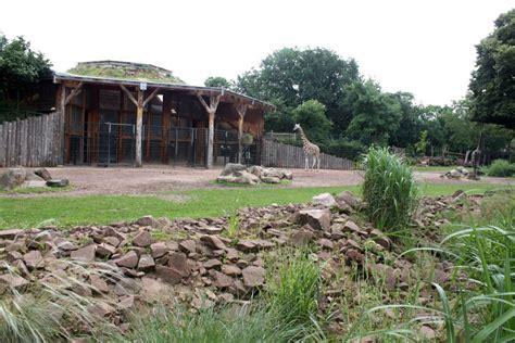 Magdeburg Zoo  Africambo (giraffe) » Zoologischer Garten