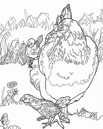 Coloring Chicken Pages Adult Digital Chicks Chickens