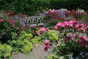 England Gardens Roses Bench Shrubs Rosemoor Gardens Devon ...