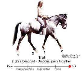 Trot (horse gait) images
