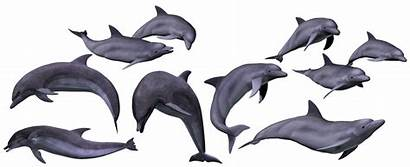 Ocean Sea Pixabay Dolphins Marine Animal Animals