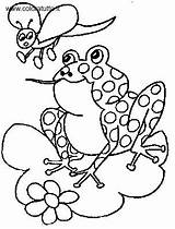 Anfibi Disegni Frosch Fliege Tiere Coloring Grenouilles Frog Colorare Coloriages Coloriage Catching Butterfly Immagine Colorier Animaux Disegno Stampa Malvorlage Frogs sketch template
