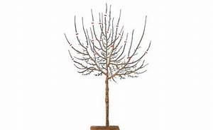 Kirschbaum Richtig Schneiden : pflaumenbaum schneiden so geht s richtig mein sch ner garten ~ Frokenaadalensverden.com Haus und Dekorationen