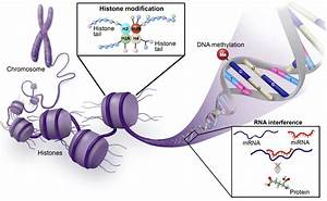 Epigenetic Mechanisms  Emerging Therapeutic Targets For Blood Disorders