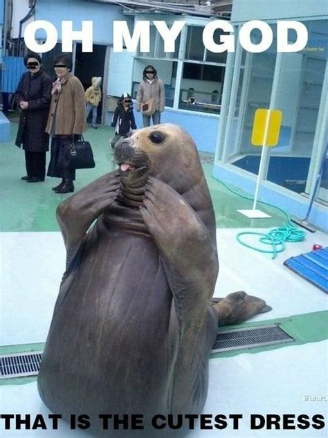 For Seal Meme - funny animals funny seal pictures images