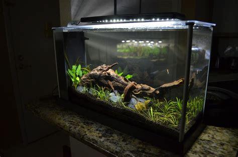 Fluval Spec Aquascape by Fluval Spec V Aquascape Aquariums