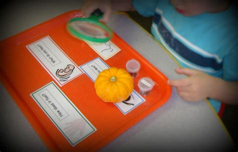 preschool pumpkin science activities more pumpkin activities in preschool 527