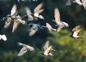 Faire Fuir Les Pigeons : strasbourg des ultrasons pour faire fuir les pigeons ~ Melissatoandfro.com Idées de Décoration