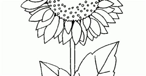 dibujo de girasol dibujo infantil  colorear de girasol presentaciones pinterest