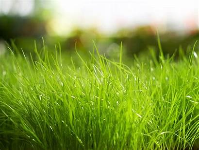 Grass Background Fresh Presentations Nature Backgrounds Lawn