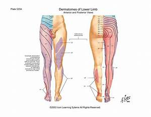 scientia - Joints of the Lower Limb