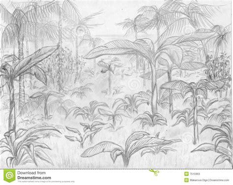 jungle landscape stock illustration illustration  tree
