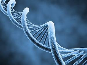 The DNA Diet | Dr. Melissa P. Broyles
