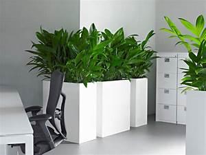 Plante Bureau Photos De Magnolisafleur