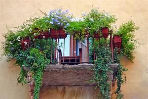 Pflanzen Sichtschutz Balkon : balkon balkonwunder ~ Eleganceandgraceweddings.com Haus und Dekorationen