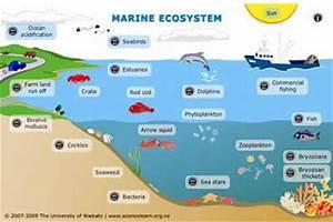 Our Oceans, Seas and Coasts - Environment - European ...