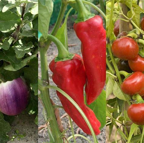 r 233 ussir la culture de l 180 aubergine du poivron et du piment ferme de sainte marthe