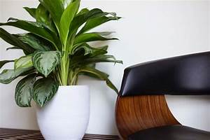 The Use Of Plants In Modern Interior Design