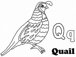 quail coloring pages | Only Coloring Pages