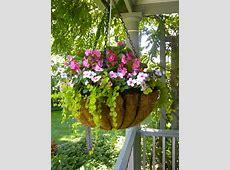hanging basket of impatiens, begonias and lychamachia