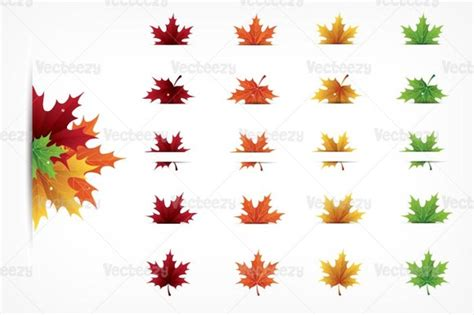 types of maple leaves with pictures top leaves falling from tree drawing wallpapers