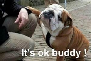 funny pitbull pics | Bulldogs With Funny Captions | Latest ...