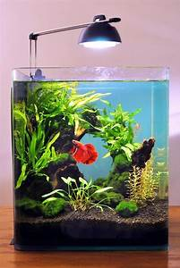 Petit Aquarium Design : 10 gallon fish tank stand ideas for your aquarium fish ~ Melissatoandfro.com Idées de Décoration